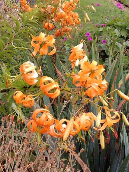 beautiful flowers in the Tuileries